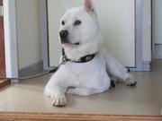 ウチの日本犬 紀州犬たより