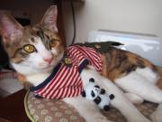 三毛猫ちぃの ☆おかわりちょうだいっ☆