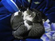 猫日記。〜猫たちの日常〜