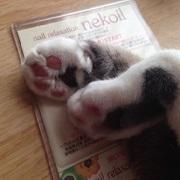 〜nail relaxation〜 nekoil