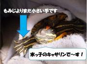 亀バカ日誌〜亀バカ社長の独り言〜