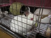 おっさんの超初心者,はじめてのウサギ飼い苦楽日記