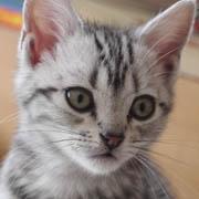 猫雑貨のお店にゃんスタイルとニャンコ達とワンコ