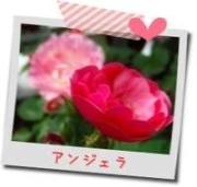 アンジェラの花遊び