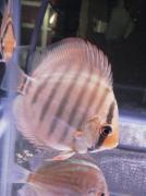 佳奈と熱帯魚