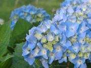 四季の花めぐり