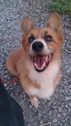 Dog School 〜縁〜 島根県出張しつけ・訓練