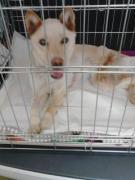Animal Rescue Japan 静岡  動物たちの命を守る会