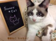 Sunny*Cat