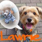 犬のお洋服屋さんLawrie