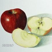 SHIHOのアトリエブログ