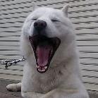 北海道犬の新常識(ブログ編)