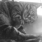 たまたまたまの猫日記