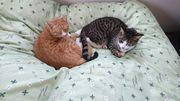 ライフオーガナイズと猫と日常