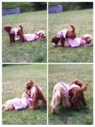Reon&Cocoの日常