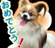 イラスト屋ページアップの愛犬と過ごす日々ブログです