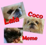 『ララ』と『ココ』