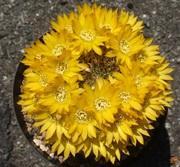 さくたろうのサボテン栽培と日々の出来事ブログ