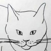 猫ちゃんのクロッキー