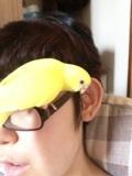 小鳥のいる生活☆