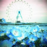 佐賀と福岡の花景色