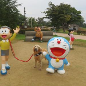 ゴールデンレトリバー カンタとの日々!