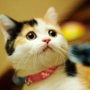 三毛猫こはるとしば園長のおしゃべり動物園
