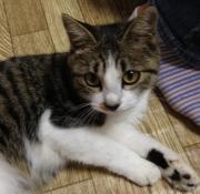 チョビ〜のブログ
