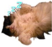 My pets & My life~多数の猫と二人の人間の物語~