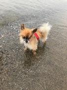 東海発!カップル&愛犬DEキャンプ