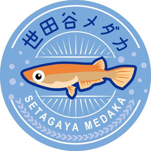 世田谷メダカ&のんびり金魚ライフ
