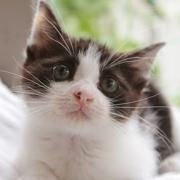 黒トラ子猫「ミム」の幸せ探しブログ。