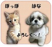 捨て犬 『はな』 と迷い猫 『ぽっぽ』 の 成長物語