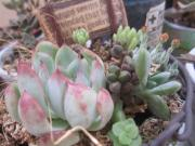 yuco Garden Life