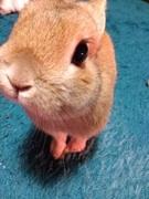 ヒトに厳しく、ウサギに優しく。