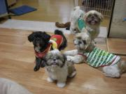 4匹の愛犬のブログ