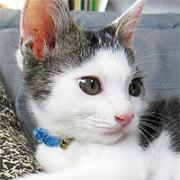 猫ねこ仔猫「ポッポとナツ」の日常