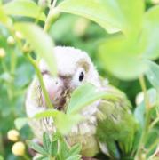 跨線橋の鳥