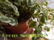 Peony Nail&Deco