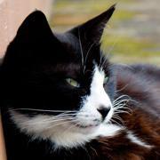 ほっこり猫日記「ねこどり」