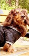 ディア ドッグ・愛犬とお洒落してお出かけ