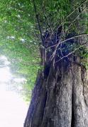 スピリチュアルツリー
