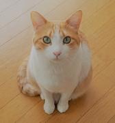 猫好きKinanのDIYライフ!