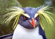 ペンギンのおしり