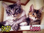 Hop-Step-『SKIP』