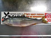 付知川の鮎釣りと野鳥撮影