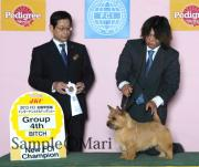 Marvelous Aslan Kennel の日常