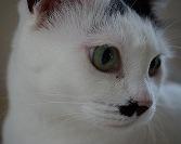 こねこと猫