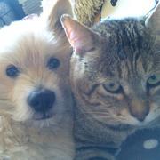 犬と猫と美味しいものと