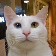 福島の猫カフェ☆猫も人もHAPPYなあいブログ♪